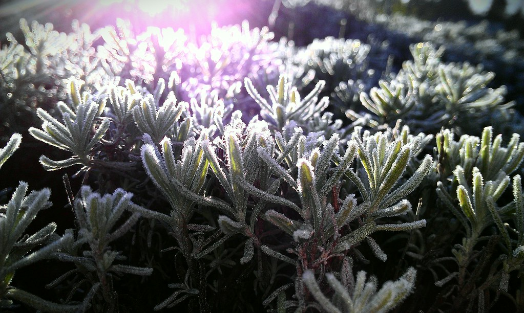 Frosty morning in Seattle