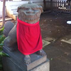 狛犬探訪 鹿島神社本殿は狛犬はおられない。脇にある旧本殿におられる。