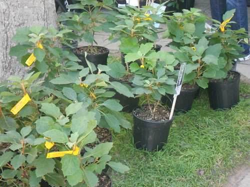 Fall Plant Sale Birmingham Botanical Gardens