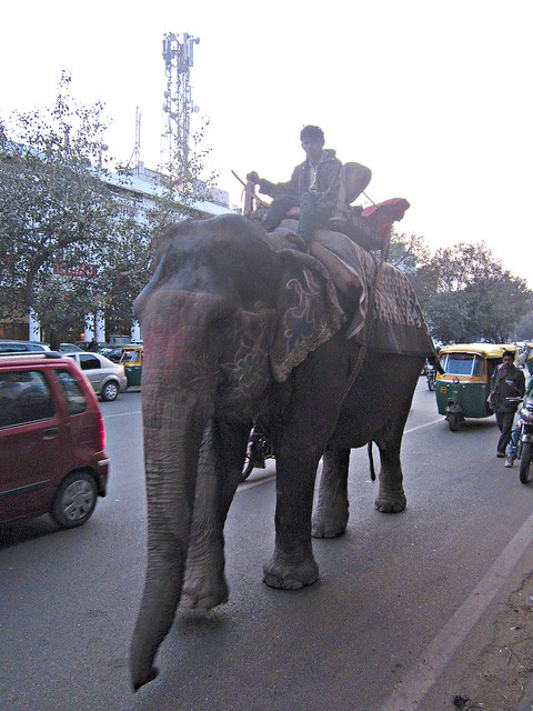 elephant in Connaught Place, Delhi