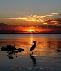 Sunrise-Crane-w-watermark