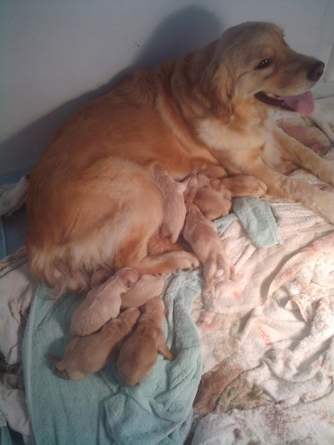 Honey & her pups