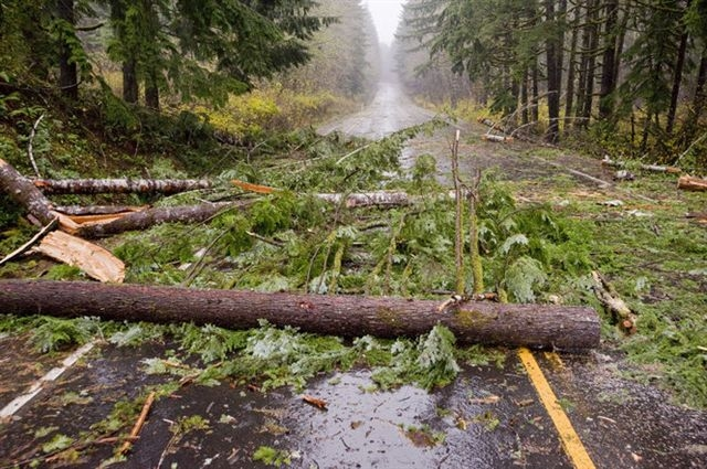 Fallen trees on Oregon 18