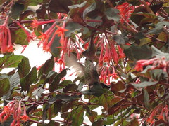 Humming bird in the flowers