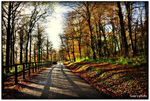 autumn trees woods nikon d90 castlecochwoods nikond90 forestfawr 18105vr