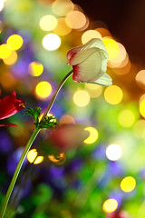 Light decorated flower