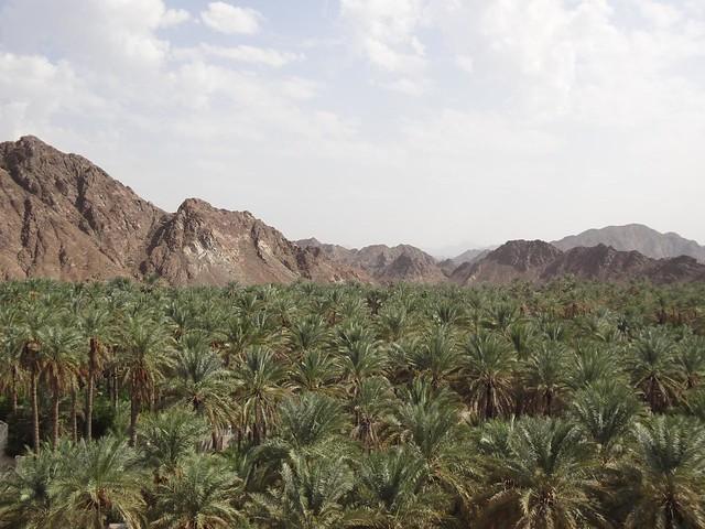 Palmeiral de Samail Omã