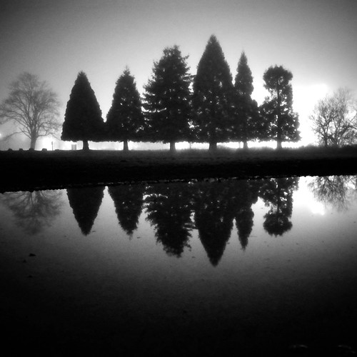 seattle park trees blackandwhite bw 6 reflection tree fog pine night square washington foggy wa washingtonstate ricoh brouillard sapin marymoor noirblanc 2011 marymoorpark grd4 bwsquare blackandwhitesquare ricohgrdiv grdiv richgrdiv