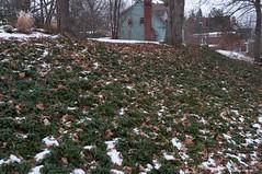 Snowy Green