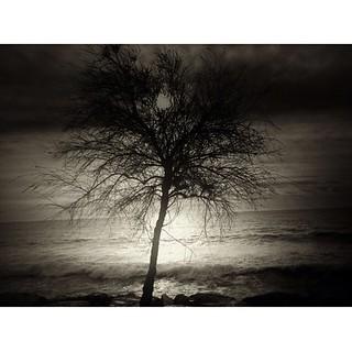 Sea, sun, tree!