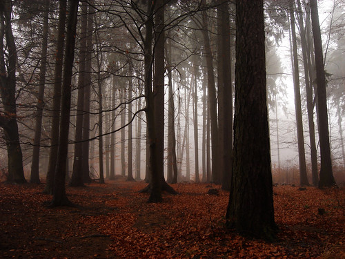 wood trees red brown mist leaves weather misty fog forest sadness highlands woods silent view czech path hill foggy silence czechrepublic among melancholy overlook leafs vysoka vysočina česko českárepublika vysocina vysoká vrchovina ceskomoravska czechmoravian českomoravskávrchovina ceskomoravskavrchovina czechmoravianhighlands fogamongtrees