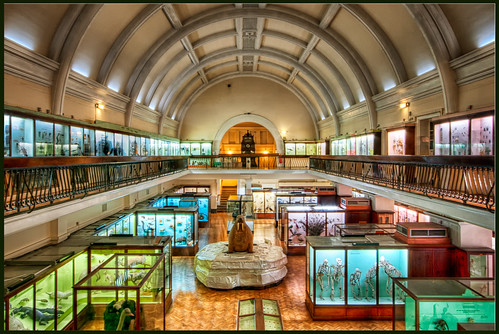 The Natural History Gallery, Horniman Museum, London.