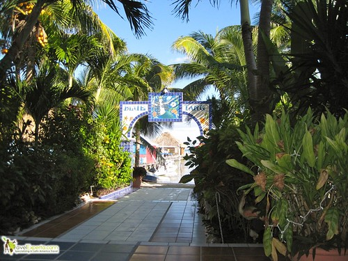 Quick Travel Guide to Belize - blue tang hotel