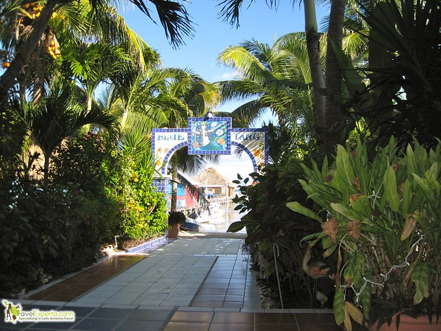 blue tang hotel in belize