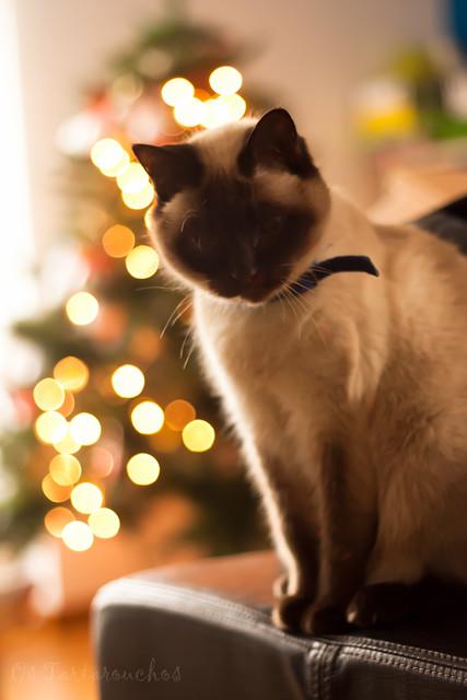 Olivia os desea Feliz Navidad!!