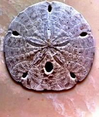 carving(0.0), invertebrate(0.0), iron(0.0), circle(0.0), organ(0.0), art(1.0), fossil(1.0),