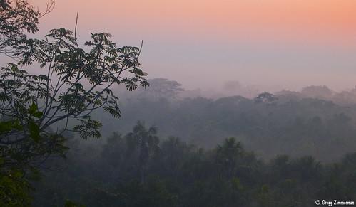morning peru rain forest sunrise early amazon nikond50 research jungle varzea madrededios fieldstation terrafirme cicra dsc9722 centrodeinvestigaciónycapacitaciónriolosamigos