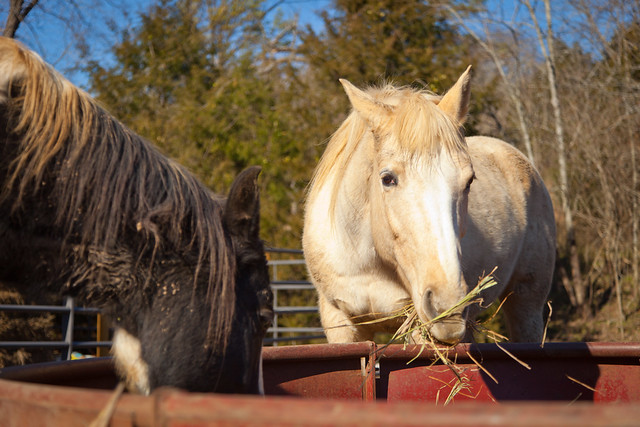 Horses 9746