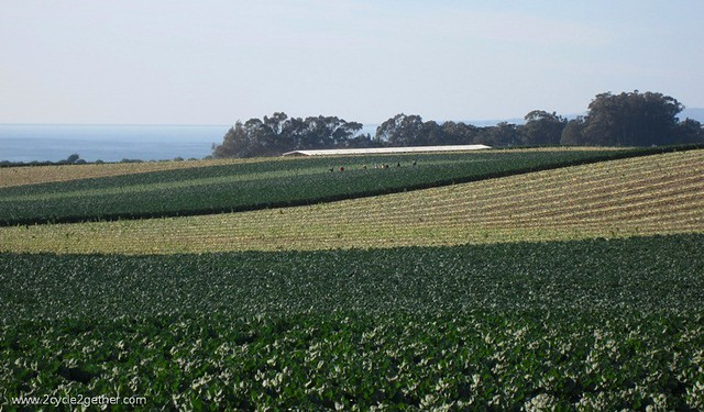 Near Watsonville - Miles of Farmland