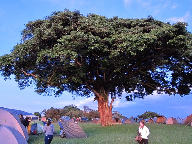 Simba A Campsite, Ngorongoro Crater