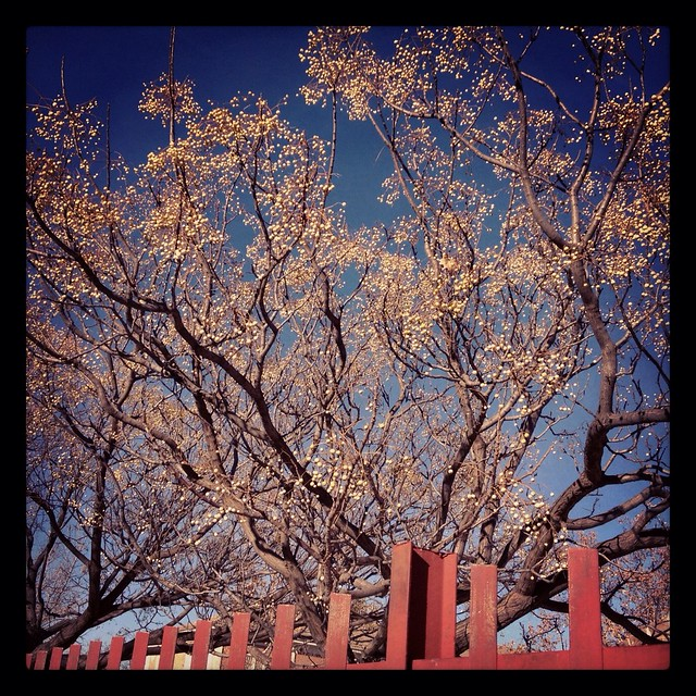 Beautiful tree behind red fence
