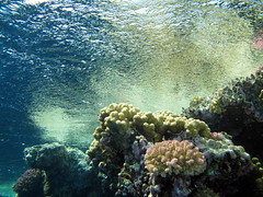 The surface is aluminium, Red Sea, Egypt #underwater #snorkel #pictures