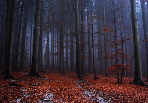 trees mist snow tree leaves misty fog forest sadness frozen highlands silent sad czech path foggy silence freeze mysterious czechrepublic melancholy leafs melancholic vysoka vysočina česko českárepublika vysocina vysoká vrchovina ceskomoravska czechmoravian českomoravskávrchovina ceskomoravskavrchovina czechmoravianhighlands