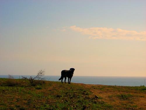 Jake scans the horizon