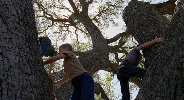 tree of life, malick, boys, playing, climbing
