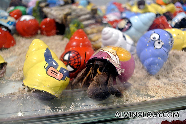 Hermit crabs in colourful painted shells
