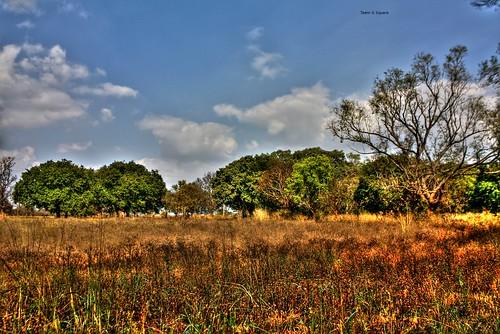 forest landscapes hdr