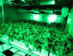 Hydroponic Grow Room Tent Fan Filter Cfl Light Kit Xx