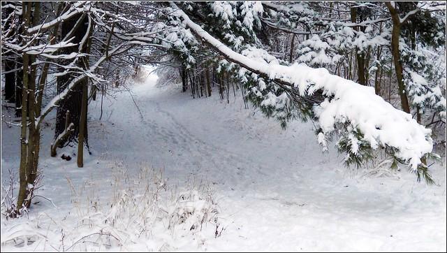 Winter Snow Path - 無料写真検索fotoq