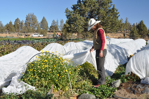 Sarahlee Lawrence inspects a row of organically grown flowers on her organic farm in the high desert of Central Oregon.