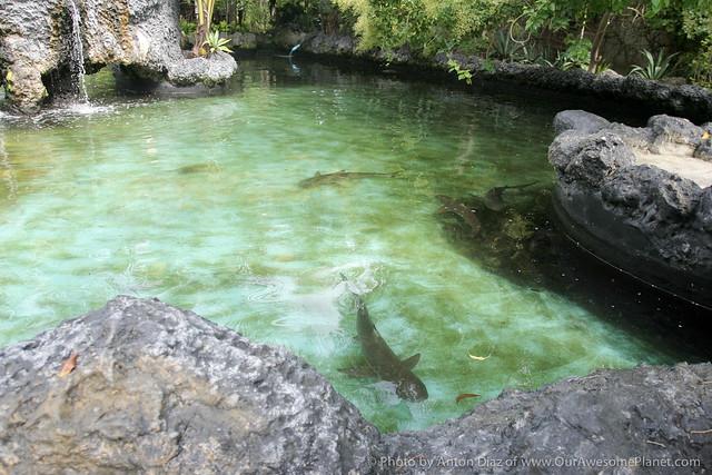Bluewater Maribago-121.jpg