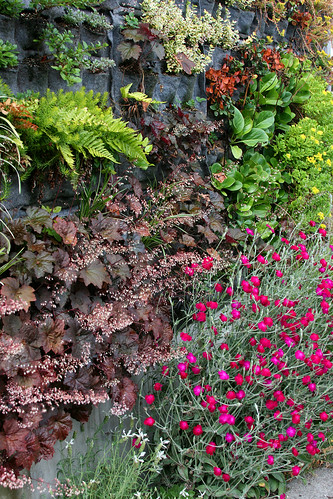 interesting what does well and what doesn't in a vertical garden