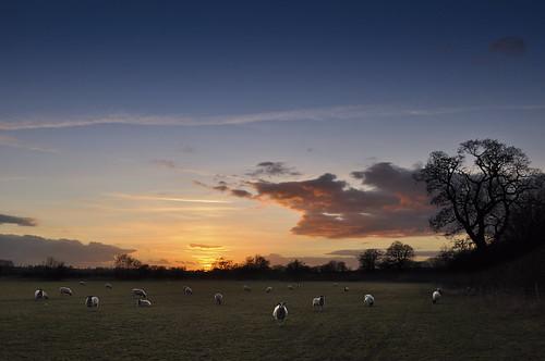 longexposure sunset portrait grass clouds sunrise landscape photography countryside nikon sheep tripod dramatic wideangle nd grad manfrotto dramtic danielwilliams neutraldensity saddington d5000 dwilliams