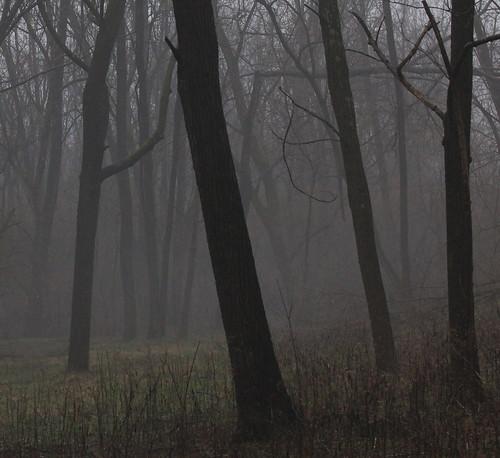 trees winter ohio mist home field rain fog forest dark walk hill meadow tamron70300