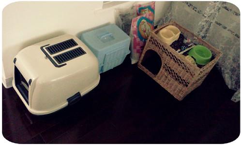 金針的家當都準備好了~貓沙盆+貓籠+貓沙+雙層睡床+吃飯的傢伙+Backey阿姨送的牛璜酸和小零食 by 南南風_e l a i n e