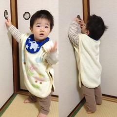 あけてくれと主張するとらちゃん(2012/2/4)