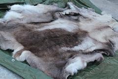 Reindeer pelts for sale