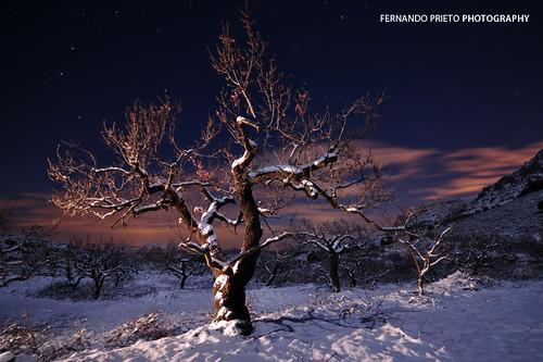 Noche en la nieve