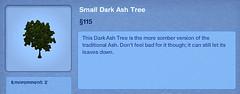 Small Dark Ash