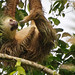 Three toed Sloth.... by Christine Kapler / PASSED AWAY