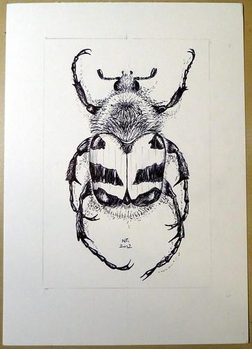 Trichius sp.