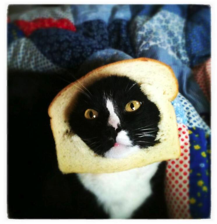 cat sandwich.