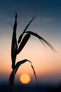 Blade of grass at sunset