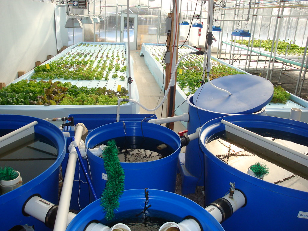 Aquaponics systems basics aquaponic garden for Fish for aquaponics