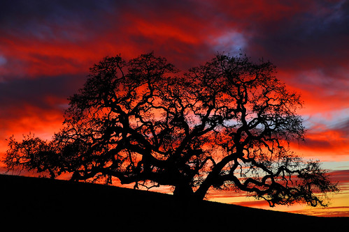 sunset tree night cloudy oaktree sanbenitocounty canon7d