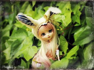 Happy Birthday Nova!!! ♥‿♥ Bunny (Pullip Classical White Rabbit)